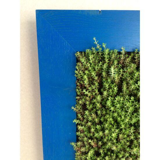 Növénykép